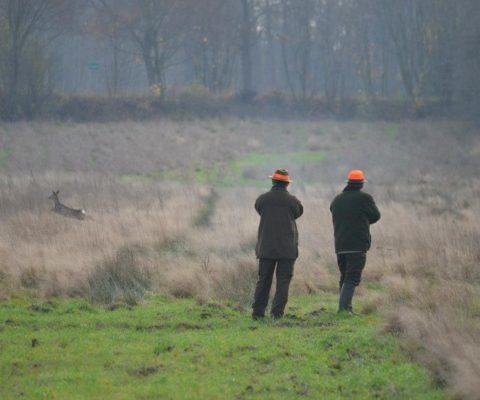 polowanie w polu