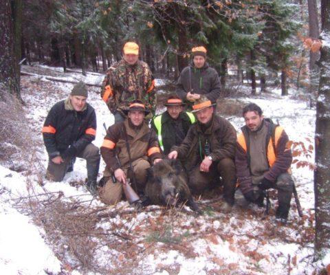 zbiorowe polowanie na dziki