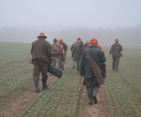 polowanie w grupie
