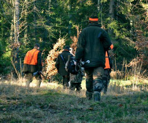 w drodze na polowanie