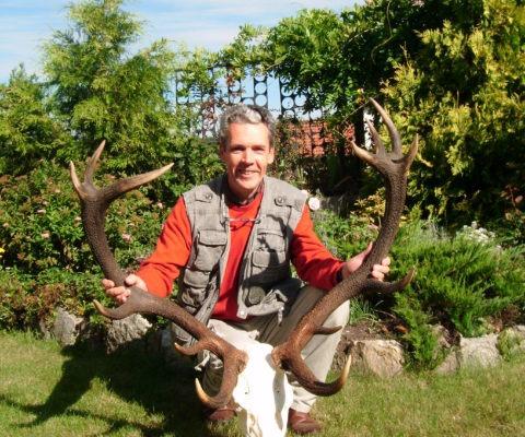 poroże jelenia