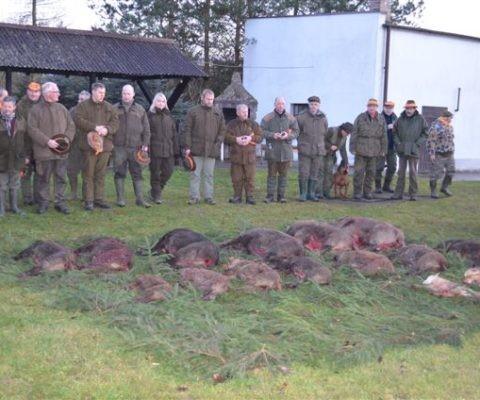 polowanie zbiorowe na dziki