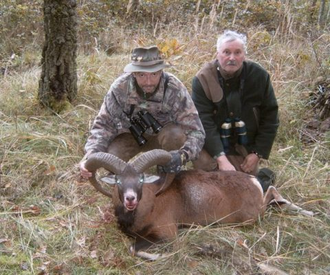 polowanie na muflona