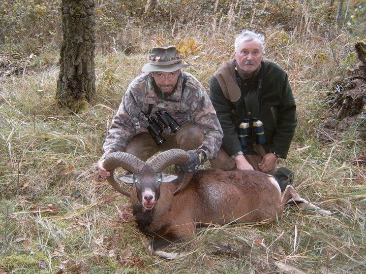 polowanie na muflony